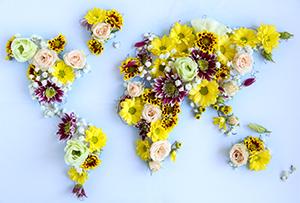 Какие цветы популярны в разных странах