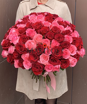 101 красно-розовая роза