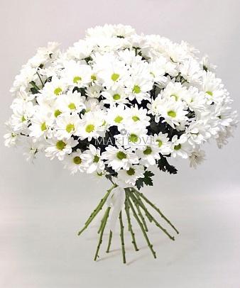 Букет хризантем «Белоснежный ангел»